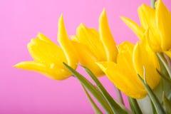 желтый цвет тюльпанов Стоковое Изображение