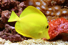 желтый цвет тяни Стоковые Изображения