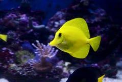 желтый цвет тяни Стоковые Фотографии RF