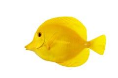 желтый цвет тяни Стоковая Фотография
