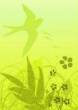 желтый цвет флоры предпосылки Стоковое Изображение RF