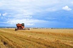 желтый цвет хлебоуборки зерна готовый Стоковая Фотография