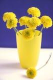 желтый цвет хризантем Стоковое Фото