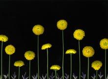 желтый цвет цветений стоковые фотографии rf
