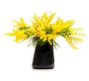 Желтый цвет цветет мимоза в вазе Стоковое фото RF