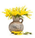 Желтый цвет цветет мимоза в вазе Стоковая Фотография RF