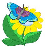 желтый цвет цветка бабочки Стоковое Изображение RF