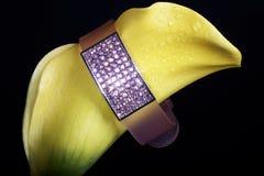 желтый цвет цветка браслета Стоковые Фотографии RF