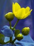 желтый цвет цветка детали Стоковые Изображения RF