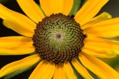 желтый цвет цветка крупного плана Стоковые Изображения