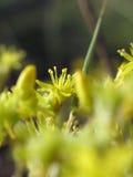 желтый цвет цветка одичалый стоковое фото