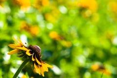 желтый цвет цветка одного предпосылки Стоковые Изображения RF