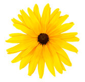 желтый цвет цветка одного Стоковое Изображение