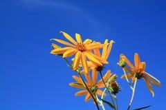 желтый цвет цветка поля Стоковые Фото