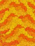 желтый цвет цветка предпосылки померанцовый stripy Стоковое Изображение RF