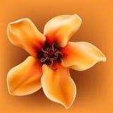 желтый цвет цветка реалистический тропический Стоковые Фото