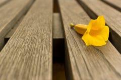 желтый цвет цветка стула Стоковая Фотография
