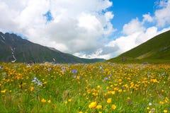 желтый цвет цветка Стоковое Фото