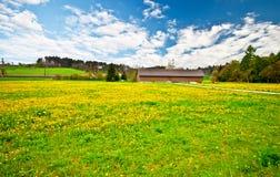 желтый цвет цветка 2 полей Стоковые Изображения RF