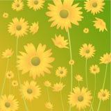 желтый цвет цветка Стоковые Изображения