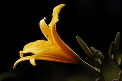 желтый цвет цветка стоковое изображение