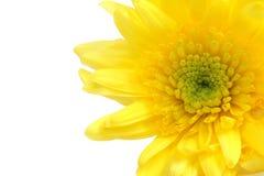 желтый цвет цветка Стоковое фото RF