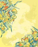 желтый цвет цветков предпосылки чувствительный Стоковые Изображения RF