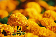 желтый цвет цветков стоковые изображения rf