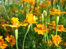 желтый цвет цветков стоковые изображения