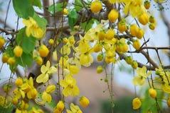 желтый цвет цветков Стоковое Изображение RF
