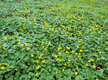 желтый цвет цветков Стоковые Фото