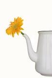 желтый цвет цветочного горшка Стоковое Изображение RF
