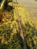 Желтый цвет цветут и предпосылка пола завода Стоковое Изображение RF