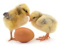 желтый цвет цыплят 2 стоковое фото rf
