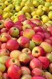 желтый цвет яблок красный Стоковое Изображение RF