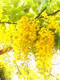 желтый цвет 01 цветка Стоковые Изображения