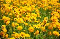 желтый цвет Стоковое фото RF