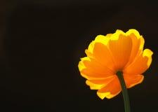 желтый цвет 6 цветков Стоковые Изображения RF
