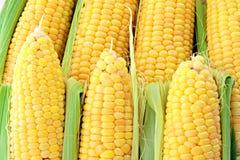 желтый цвет corns стоковые фото