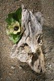 желтый цвет driftwood цветения Стоковое Изображение