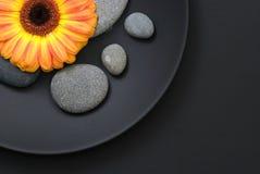желтый цвет gerbera маргаритки Стоковые Фото