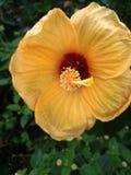 Желтый sweety цвета стоковое фото rf