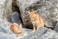 2 желтых котят играя снаружи Бой и игра кота 2 в камне Стоковое Фото