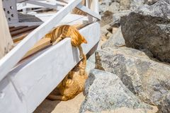 2 желтых котят играя снаружи Бой и игра кота 2 в камне Стоковая Фотография RF
