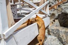 2 желтых котят играя снаружи Бой и игра кота 2 в камне Стоковые Фото