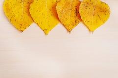 4 желтых листь хлопока осени Стоковая Фотография RF