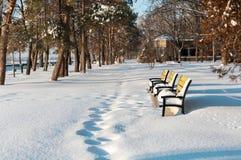 3 желтых стенда в парке зимы Стоковые Фотографии RF