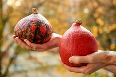 2 желтых тыквы внутри укомплектовывают личным составом руки ` - выберите к хеллоуину на запачканной предпосылке осени природы Стоковое Фото