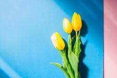 3 желтых тюльпана на голубой и розовой предпосылке Взгляд сверху и Стоковое Изображение RF