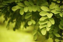 Желт-зеленая предпосылка природы Стоковое Фото